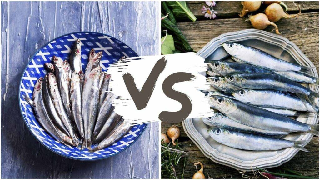 difference between anchovies and sardines